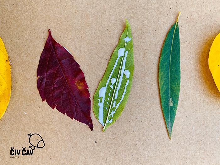 Živalice iz drevesnih listov - listke nalepimo - civcav.si
