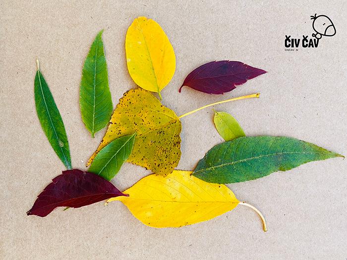 Živalice iz drevesnih listov - naberemo listke - civcav.si