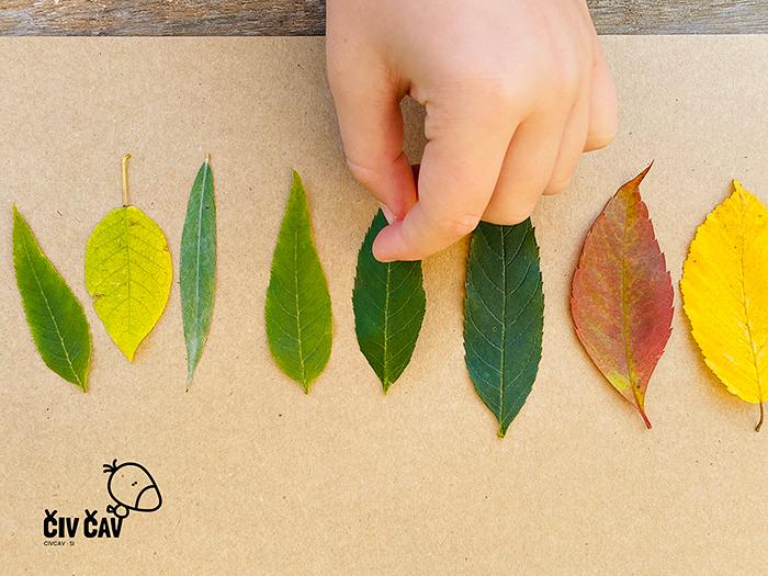 Živalice iz drevesnih listov - listke razvrstimo - civcav.si